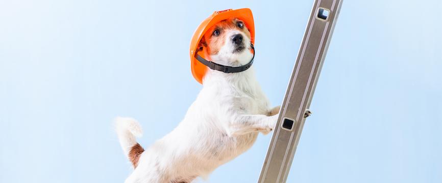 Dog climbs a ladder!