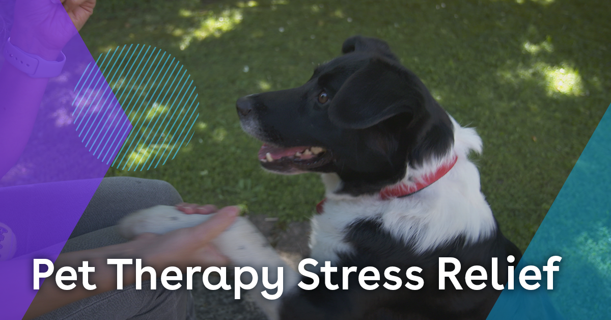 How pet therapy can reduce stress